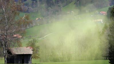 Allergiker aufgepasst: Hitzesommer können Pollenflug vermutlich verkürzen