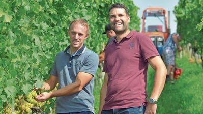 Weinfelder Winzer freuen sich über den Prachtsommer für die Reben