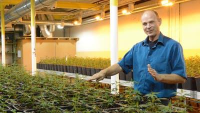 Geschäftsleitungsmitglied Peter Külling in der Indoor-Produktionsanlageauf dem Interpars-Areal in Schönenberg. (Bild: Georg Stelzner)