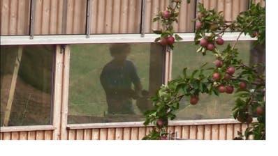 In den Stall gezoomt: Der Nachbar des Schafbesitzers filmte diesen beim unzimperlichen Umgang mit seinen Tieren. (Bild: Screenshot)