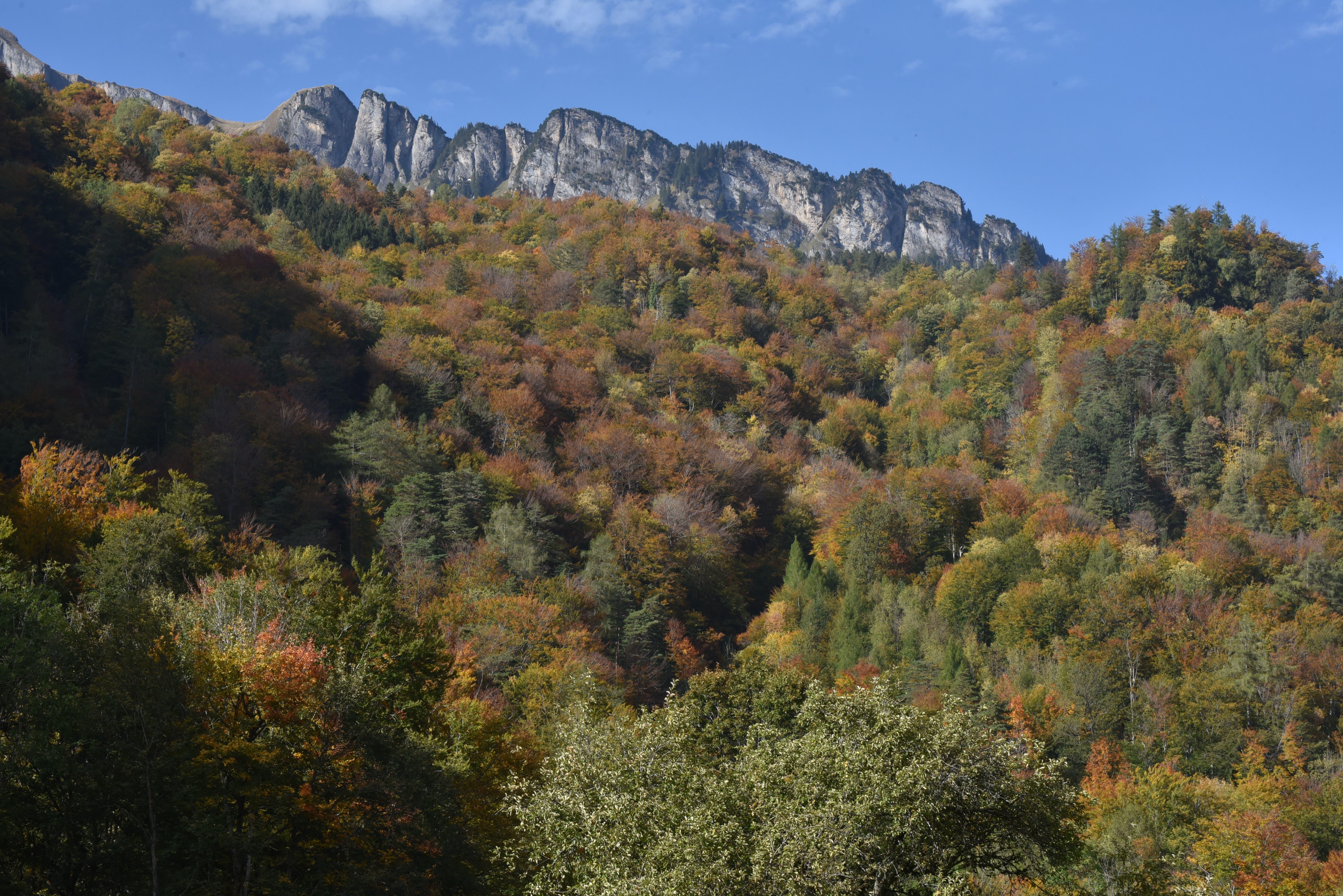 Der Wartauer Wald zeigt sich in den schönsten Farben. (Bild: Heini Schwendener)