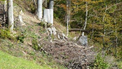 Kurz nach der Auflichtung ist die Fläche neben dem Asthaufen noch kahl. Mit den Jahren entwickelt sich hier eine Strauchschicht. So entsteht neuer Lebensraum für Pflanzen und Tiere. (Bild: Ökobüro Hugentobler AG)