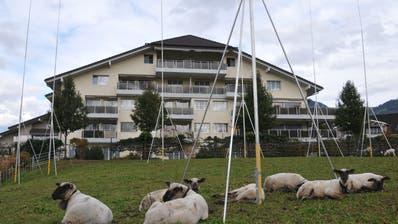 Profilstangen deuten den geplanten Neubau der Betagtensiedlung Huwel seit Monaten an. Die Schafe kümmerts nicht. (Bild: Matthias Piazza, Kerns, 18. Oktober 2019)