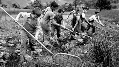 Verdingkinder leisten im Juli 1954 Feldarbeit in der Armenerziehungsanstalt «Dorneren» ob Wattenwil im Berner Gürbetal. (Bild: Keystone)