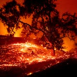 Waldbrand wütet in kalifornischem Weinbaugebiet
