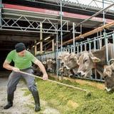 Andreas Elliker füttert seine Braunvieh-Kühe im provisorisch errichteten Stall. (Bild: Reto Martin)