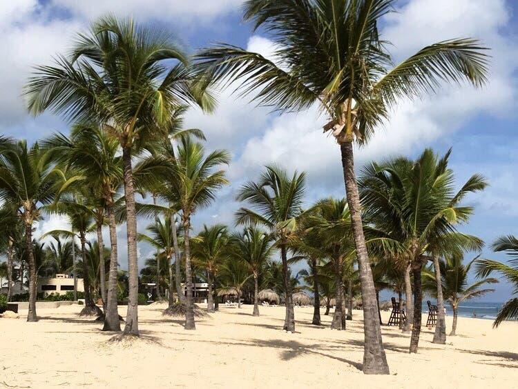 Begehrtes Reiseziel: Sandstrand unter Palmen in der Dominikanischen Republik. (Bild: Annina Steininger, Punta Cana, September 2019)