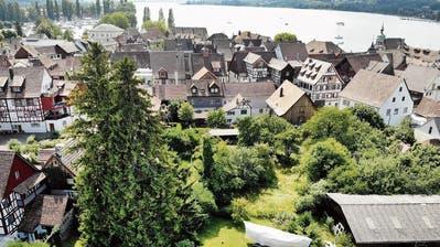 Grün und Grau sind nicht einerlei in der Steckborner Altstadt
