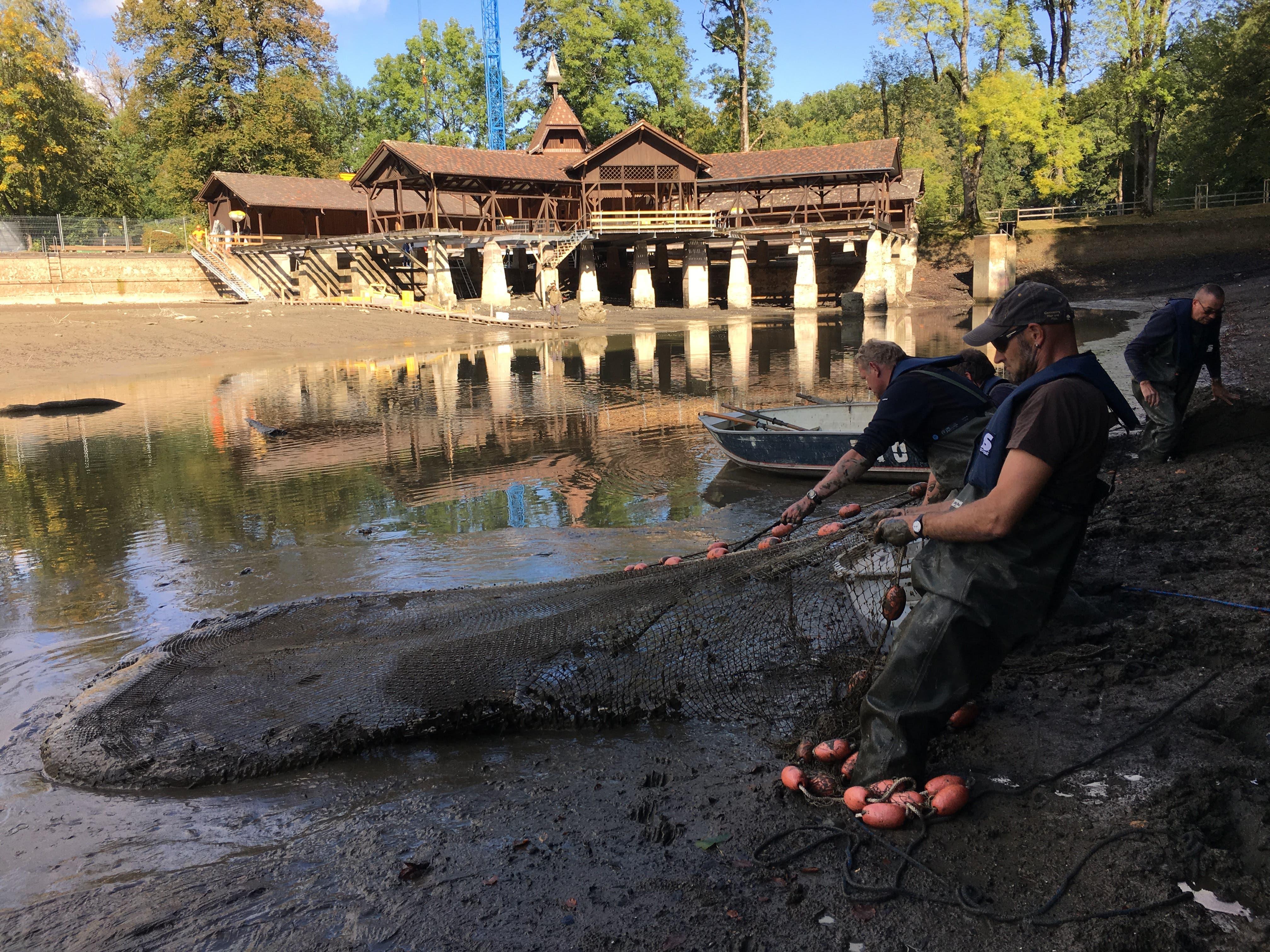 Im hüfttiefen Grund stehen Mitarbeiter vom Amt für Jagd und Fischerei sowie Helfer vom Fischerverein und ziehen mit Netzen die Fische aus dem Wasser.