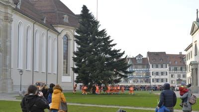 Der Helikopter schwebt über dem Klosterplatz, während Arbeiter unten versuchen, den Stamm des Christbaums ins dafür vorbereitete Betonloch zu bugsieren.(Bild: Reto Voneschen - 11. November 2019)