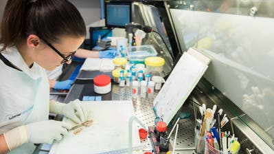 Assistenzärztin Valentina Allmannpräpariert eine Gewebeprobe aus dem Unterleib einer Patientin. (Bilder: Eveline Beerkircher, Luzern, 15. November 2019)