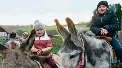 Das Eselreiten von Karin Brauchli steht am Chlausmarkt Hüttwilen bei den Mädchen und Buben hoch im Kurs. (Bild: Christine Luley)