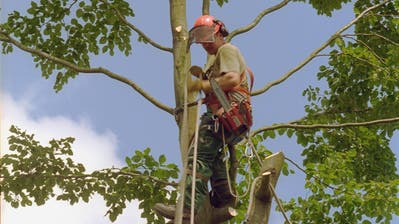 In Arbon werden einzelne Bäume aus Sicherheitsgründen gefällt. (Symbolbild: PD)