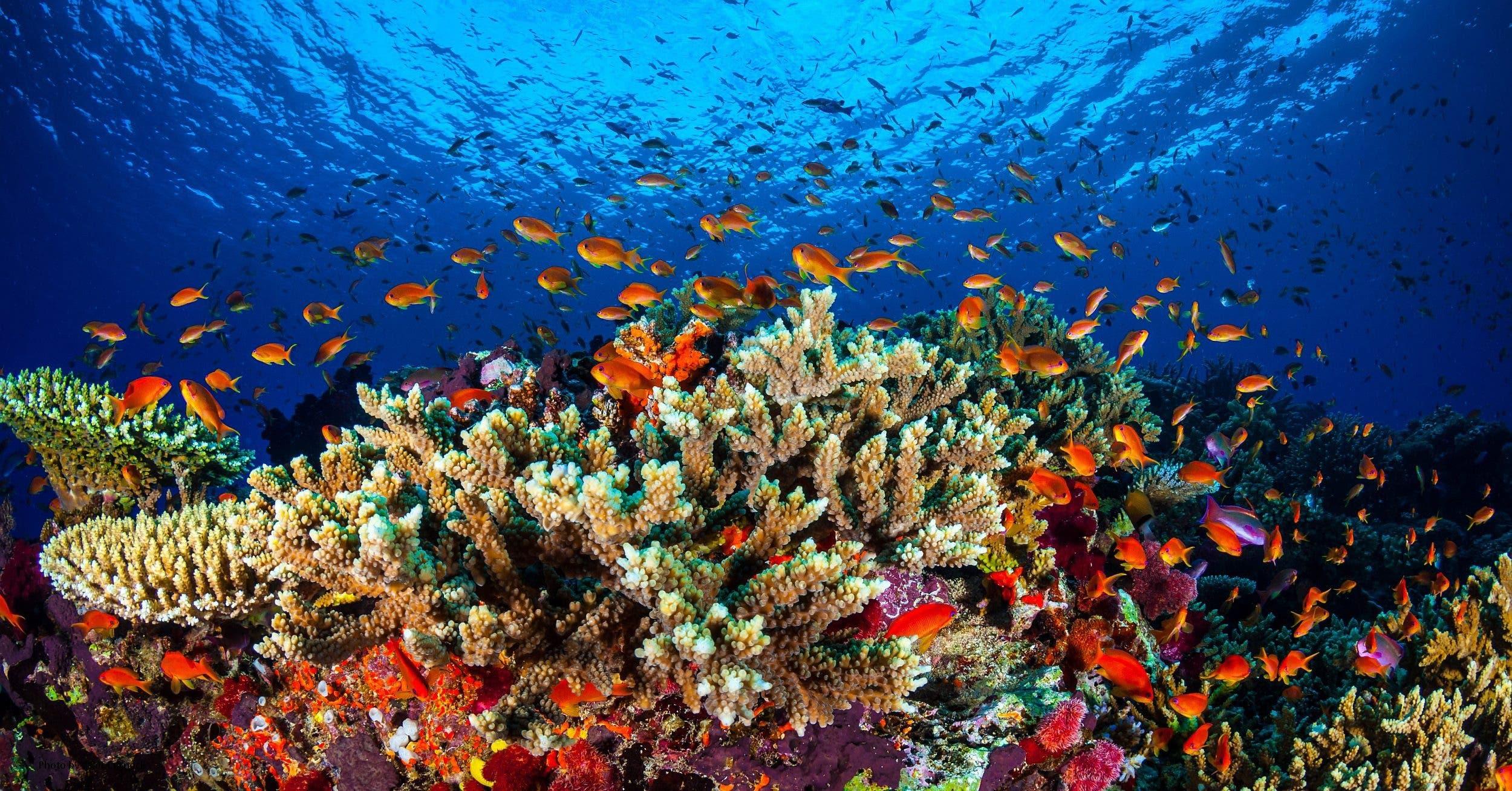 So wie auf diesem Bild sehen aber grosse Teile des Great Barrier Reefs in Australien nicht mehr aus. (Bild: Keystone)