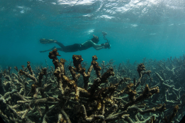 Stattdessen präsentiert sich dieses Bild von abgestorbenen Korallen. (Bild: Keystone)