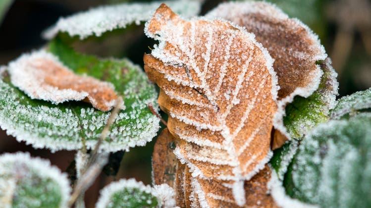 Brrr, ist das kalt! Der erste Frost der Saison ist da