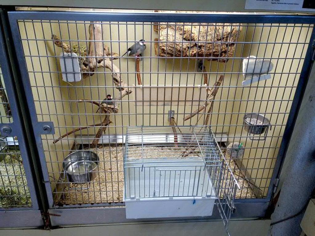 Die Heimtier-Haltung im Zoofachhandel sei oft nicht artgerecht, bemängelt der Schweizer Tierschutz