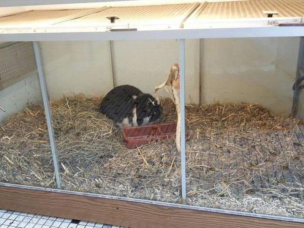 Schweizer Tierschutz kritisiert die Heimtier-Haltung in Zoofachgeschäften