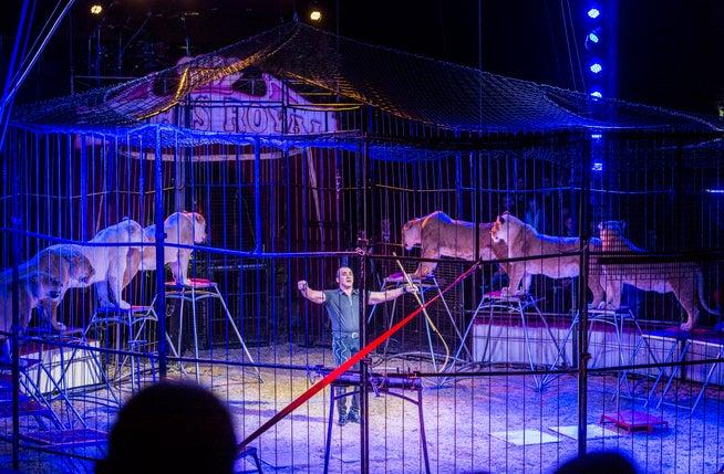 Die L&oumlwennummer des Circus Royal war umstritten.