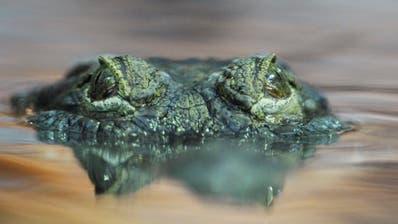 Zoo Zürich erschiesst Krokodil nach Biss in Hand von Pflegerin
