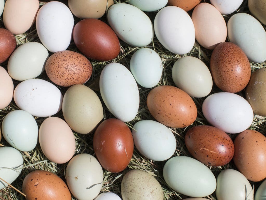 Eierschwemme in der Schweiz: 2019 dürfte erstmals die Milliardenmarke erreicht werden.
