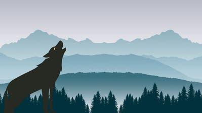 Der Wolf kommt im Mai vors Volk: Naturschutzorganisationen setzen sich für besseren Artenschutz ein