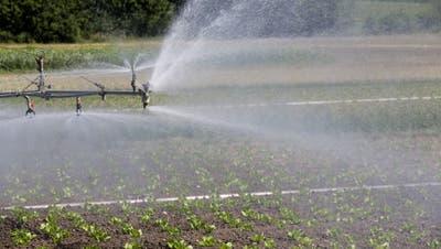 Ein Gemüsefeld im Thurgau wird bewässert. (Bild: Donato Caspari)