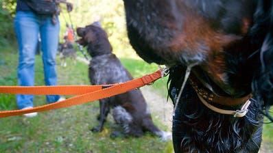 Zürcher Hundehalter müssen weiterhin in obligatorischen Kurs