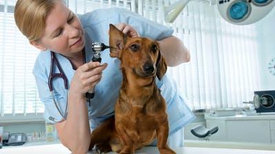 Tierversicherungen im Trend: Grosse Tiere verursachen hohe Kosten