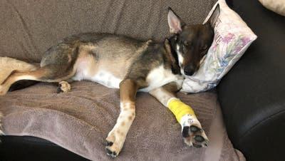 Krankenversicherungen für Tiere: Für den Notfall gewappnet sein