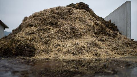 Der Gemüsebauer lagerte Mist auf einer Betonplatte, ohne ihn abzudecken. (Bild: Benjamin Manser)