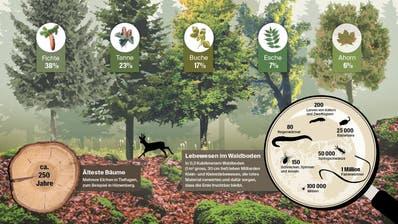 Zahlen und Fakten rund um den Zuger Wald
