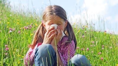 Ja dann «Gesundheit»: Je wärmer das Wetter wird, umso mehr müssen Allergiker wegen der Pollen zum Taschentuch greifen. Viele wollen deswegen die Ursache ihrer Beschwerden bekämpfen. Bild:PD