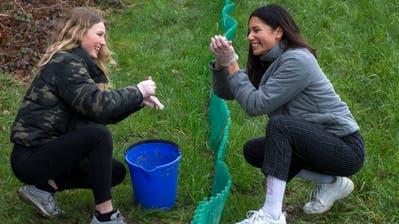 Beim Steinibühlweihersetzen die Mädchen die Frösche und Kröten aus. Bild: Dominik Wunderli (16. März 2019)
