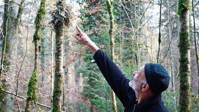 Untermieter der Bäume: Unterwegs auf dem Flechtenpfadin Basadingen-Schlattingen