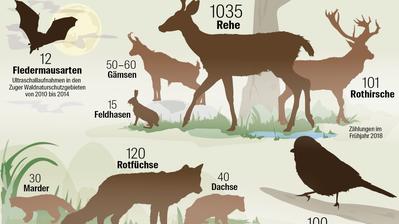 Quelle: Amt für Wald und Wild Zug / Grafik: Martin Ludwig