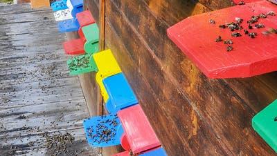 Bienensterben wegen Mehrfachbelastung durch Pestizide