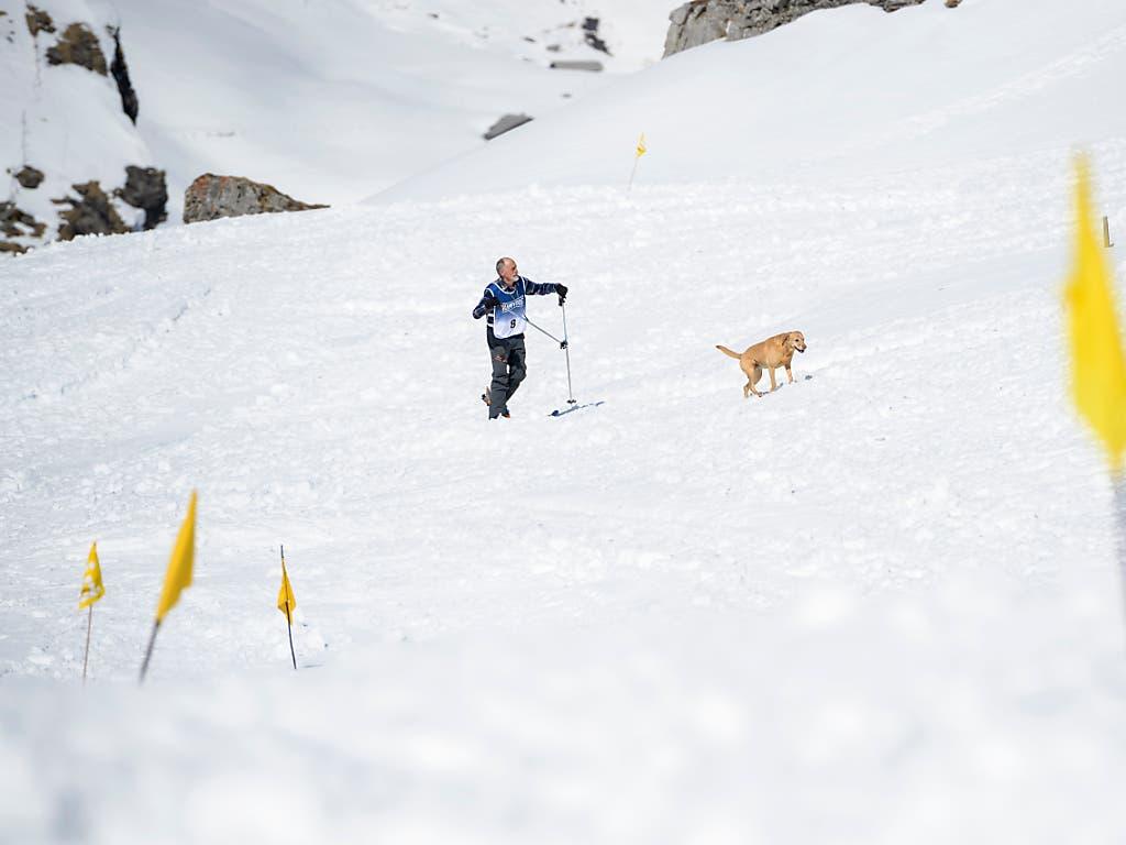 Realistische Übungsanlage: Hans Hartmann unterwegs bei der Grobsuche mit Hündin Xara an den Schweizer Meisterschaften der Lawinenhunde. (Bild: KEYSTONE/ANTHONY ANEX)