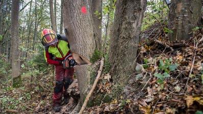 Der Mann wurde bei Waldarbeitenvon einem Baum tödlich getroffen. (Symboldbild: Urs Bucher)