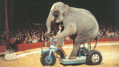 Die Rad fahrende Elefantendame Bijoya war in den 1970er-Jahren ein Star im Zirkus Krone, hinter ihr die Dompteuse Christel Sembach-Krone. Bild: Archiv Zirkus Krone
