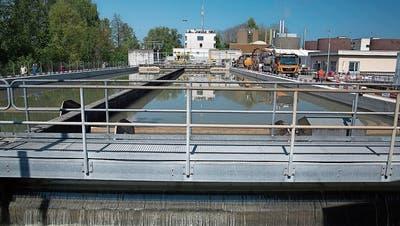 Weniger Abwasser im 2018: ARA Altenrhein bemerkte den Hitzesommer