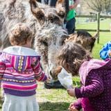 Kinder füttern an einem Tag der offenen Tür die Esel. (Bild: Andrea Stalder)