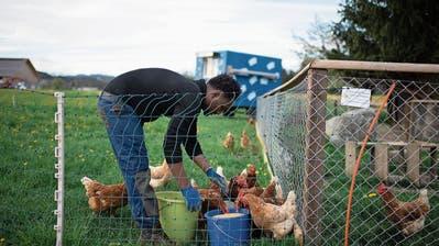 Integration zeigt Wirkung: Immer mehr Flüchtlinge arbeiten