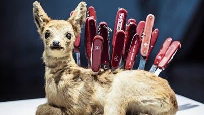 Aufgestochenes Bambi im Nidwaldner Museum verärgert Jäger