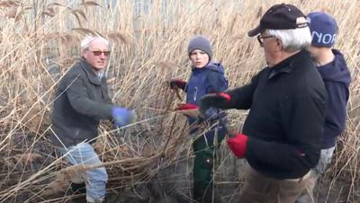 Freiwillige helfen bei der Seeputzete am Sarnersee