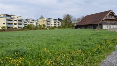 Die Scherermattein Hochdorf: Auf dieser Wiese sollen Parkplätze entstehen. (Bild: Ernesto Piazza, Hochdorf, 2. Mai 2019)