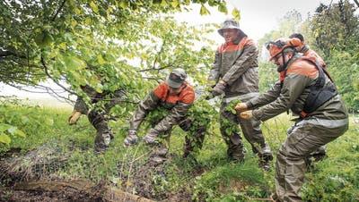 Todesfalle für Wildtiere: Gossauer Zivilschützer helfen Landwirten beim Entfernen unnötiger Zäune