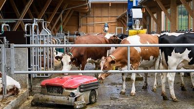 Neuer Viehstall für die landwirtschaftliche Bildung und Forschung