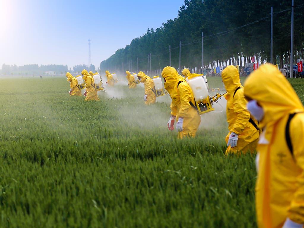 Monokulturen und Pestizide: die veränderte Landnutzung gehört mit Fischerei, Klimawandel und Verschmutzung zu den Hauptursachen für den Niedergang der Artenvielfalt. (Bild: Jinning Li/Shutterstock.com)
