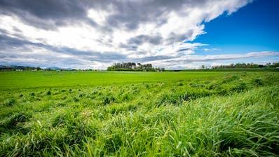 Das Gossauer Gewerbe wartet bereits seit Jahren darauf, dass im Gebiet Sommerau gebaut wird. (Bild: Urs Bucher (9. Mai 2019))